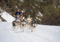 Sled dogs on course at Corn Hill Mt Buller_(c) Mt Buller_Andrew Railton