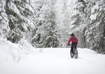 Fat-biking-in-the-forest-900x480